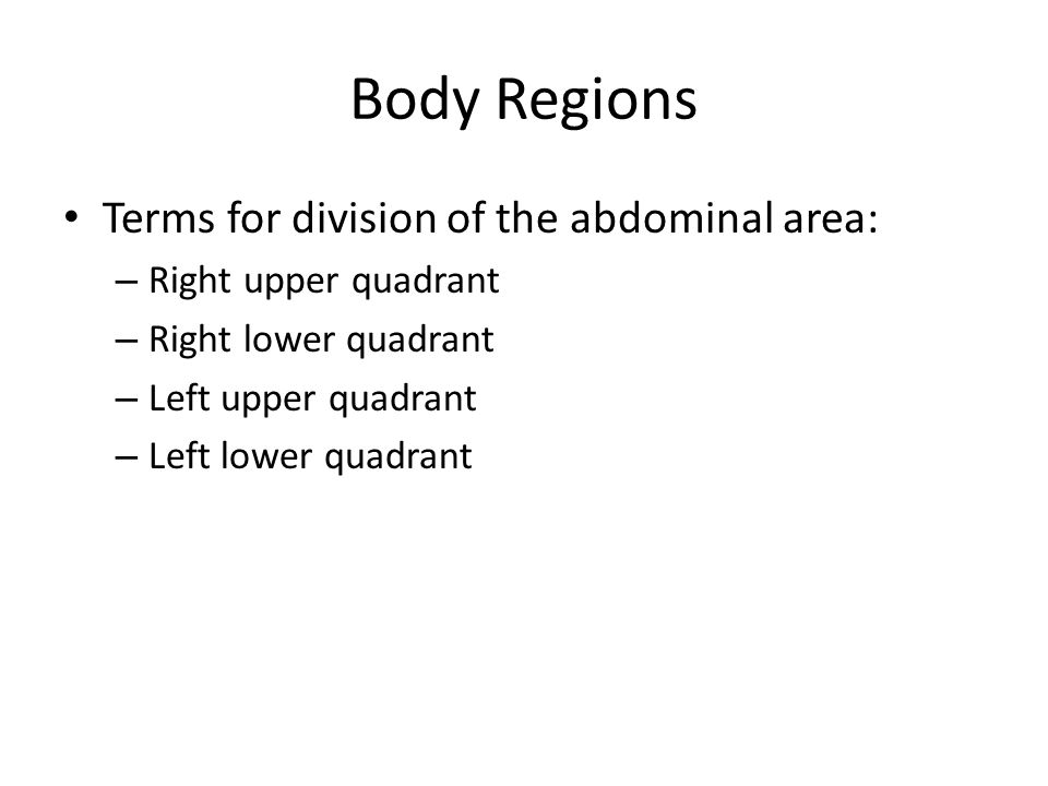 Body Regions Terms for division of the abdominal area: