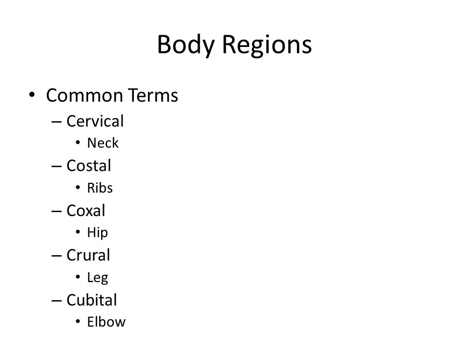Body Regions Common Terms Cervical Costal Coxal Crural Cubital Neck