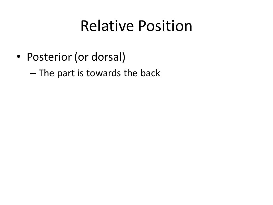 Relative Position Posterior (or dorsal) The part is towards the back
