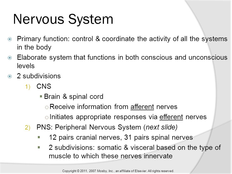 primary function of the nervous system