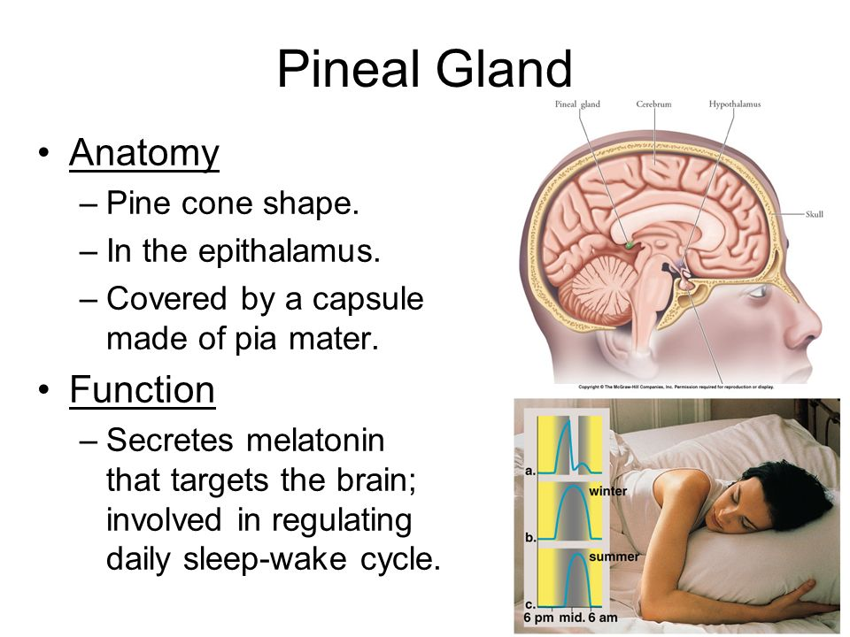 endocrine system chapter ppt video online download