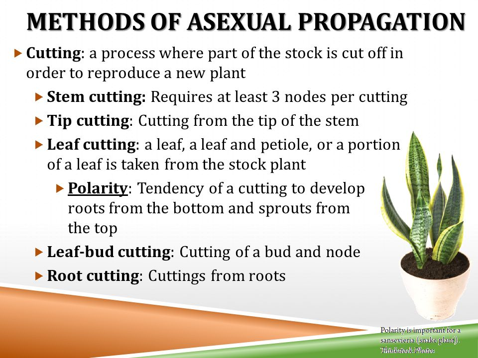Four methods of asexual propagation
