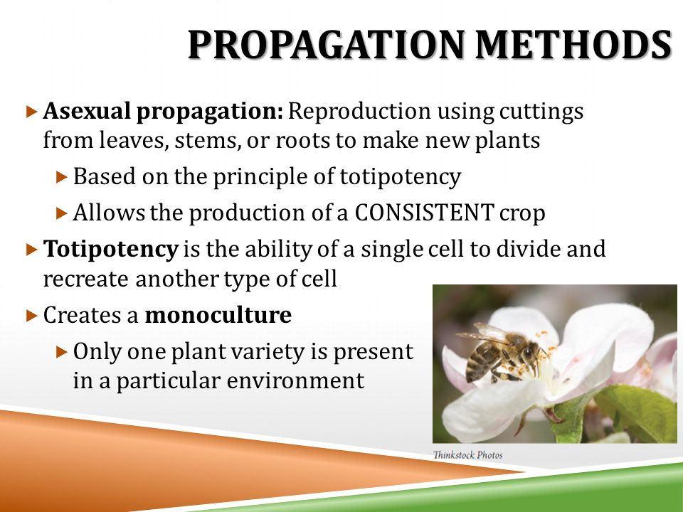 Types of asexual propagation in plants