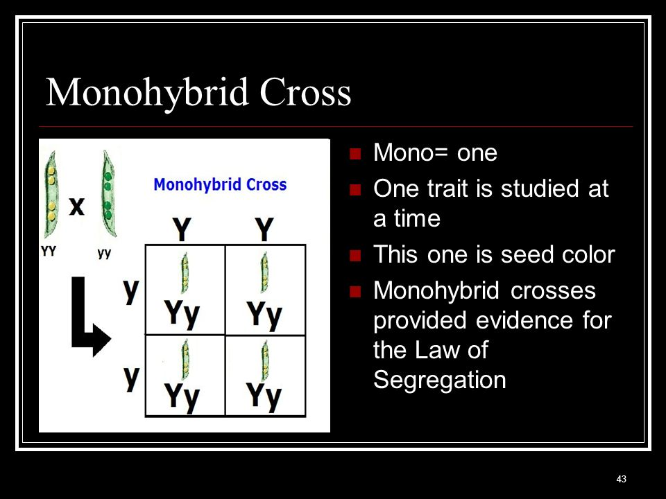 Monohybrid Cross Mono= one One trait is studied at a time