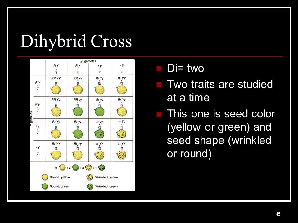 Dihybrid Cross Di= two Two traits are studied at a time