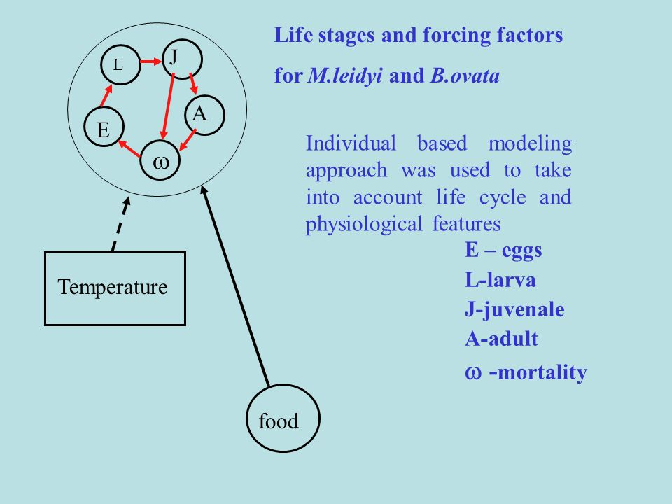   -mortality Life stages and forcing factors