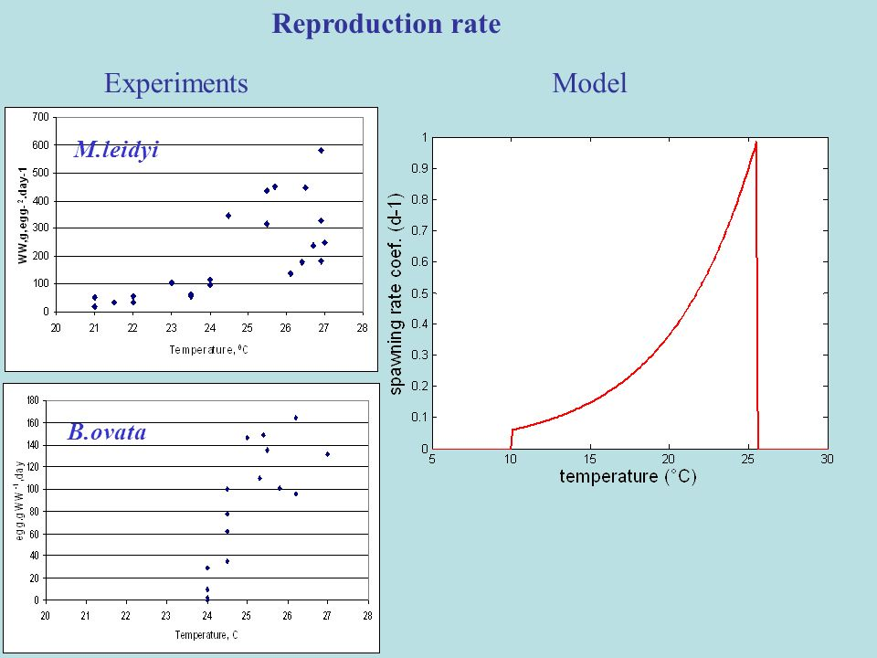 Reproduction rate Experiments Model M.leidyi B.ovata