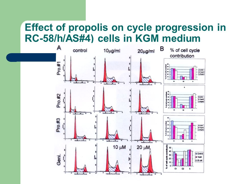 Effect of propolis on cycle progression in RC-58/h/AS#4) cells in KGM medium