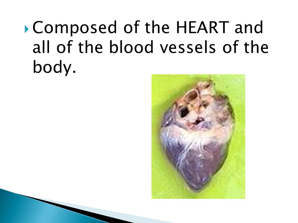 Composed of the HEART and all of the blood vessels of the body.