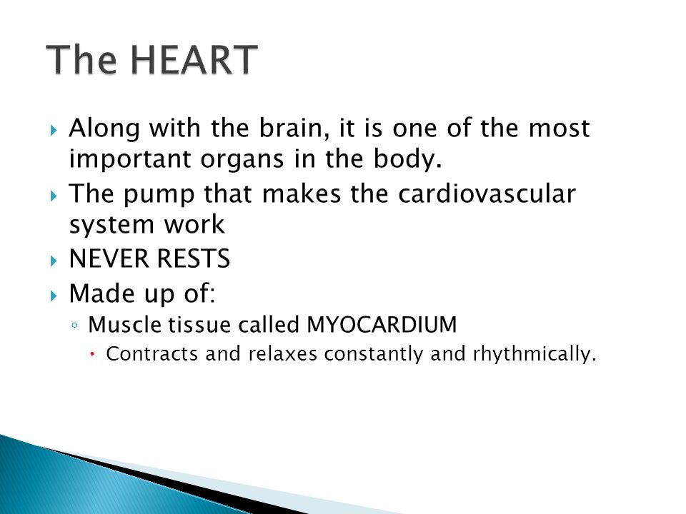 The HEART Along with the brain, it is one of the most important organs in the body. The pump that makes the cardiovascular system work.
