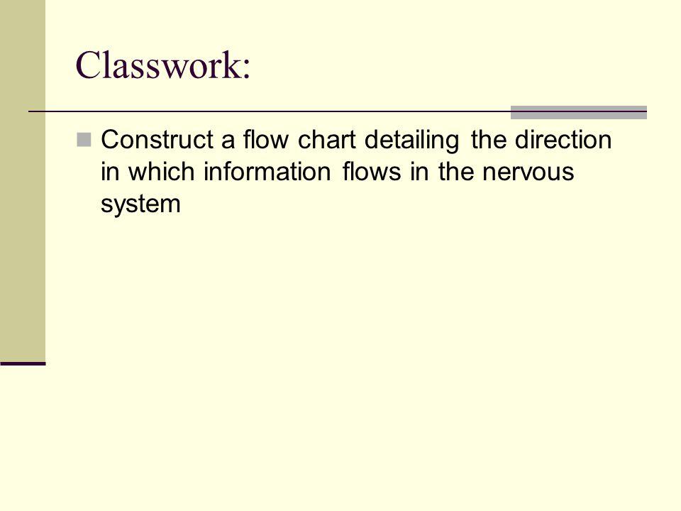 Central Nervous System Cns Peripheral Nervous System Pns Ppt