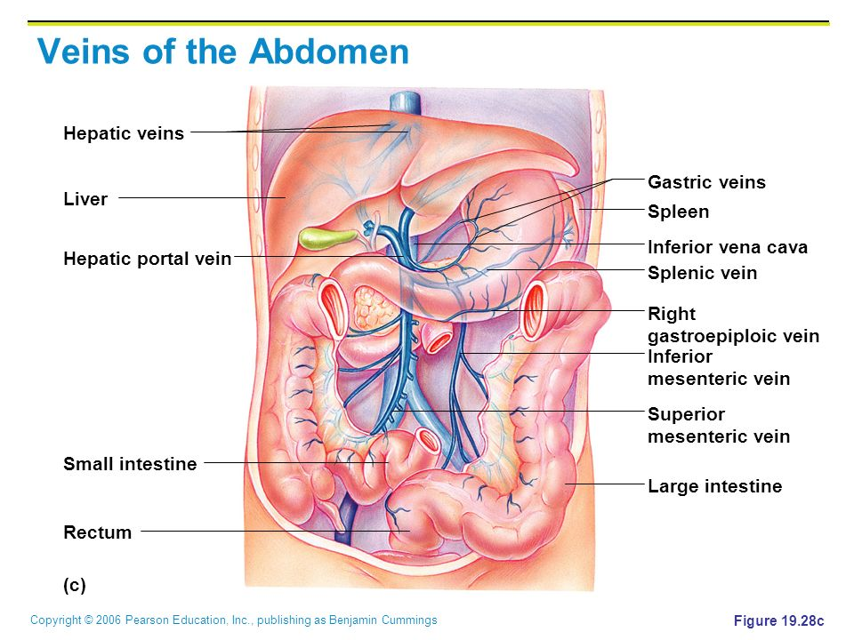 Blood Vessels Blood is carried in a closed system of vessels that ...