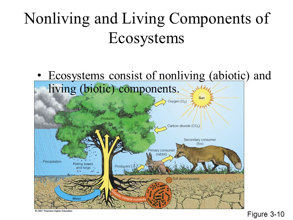 Nonliving and Living Components of Ecosystems