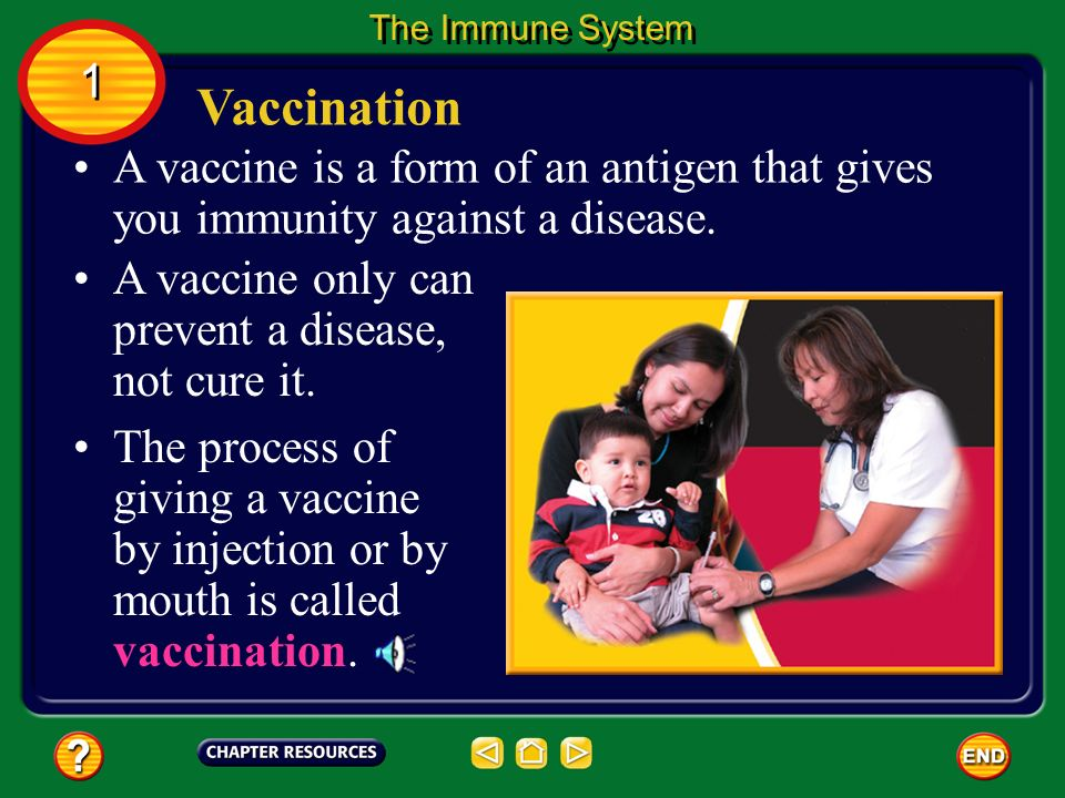 The Immune System 1. Vaccination. A vaccine is a form of an antigen that gives you immunity against a disease.