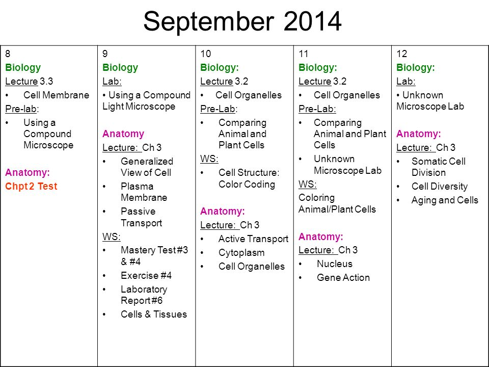 August First Day of School Biology: Syllabus Anatomy: - ppt video ...