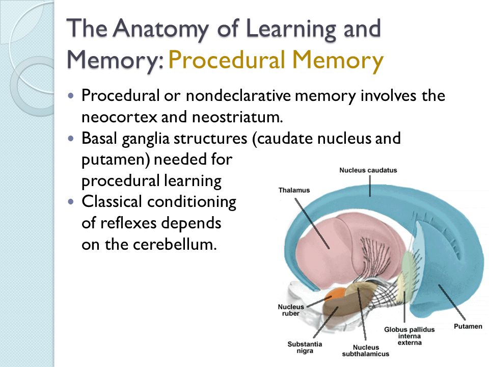 The Biology of Learning and Memory - ppt video online download