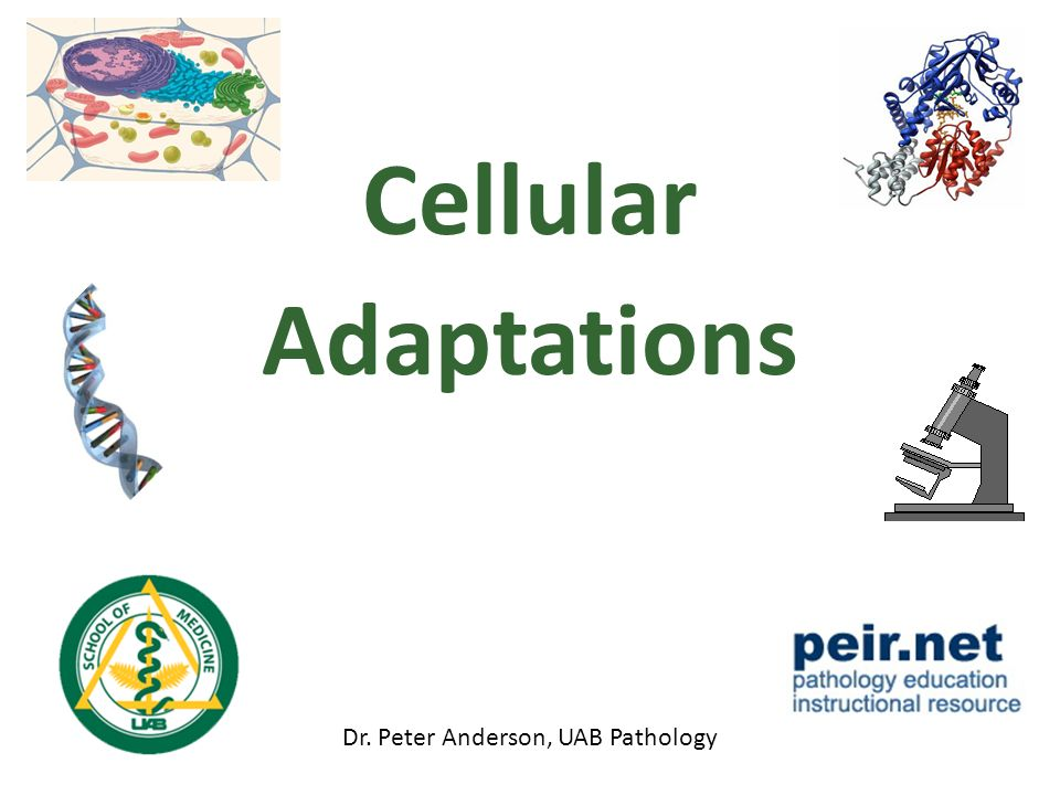 Cellular Adaptations Dr. Peter Anderson, UAB Pathology