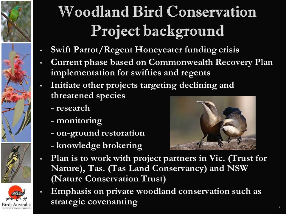 Woodland Bird Conservation Project background
