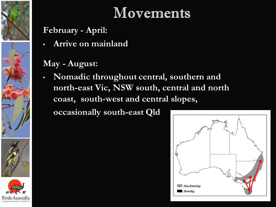 Movements February - April: Arrive on mainland May - August: