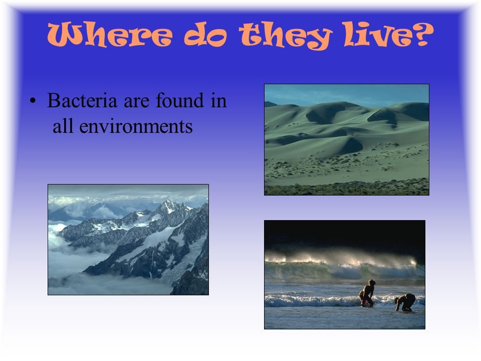 Where do they live Bacteria are found in all environments