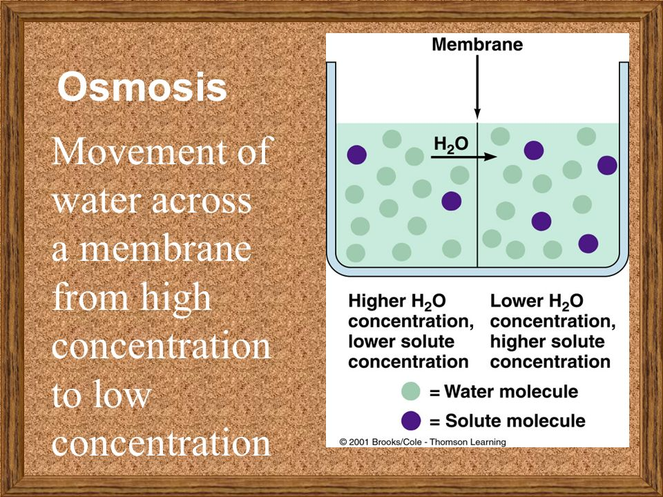 which factors affect the rate of osmotic movement of water