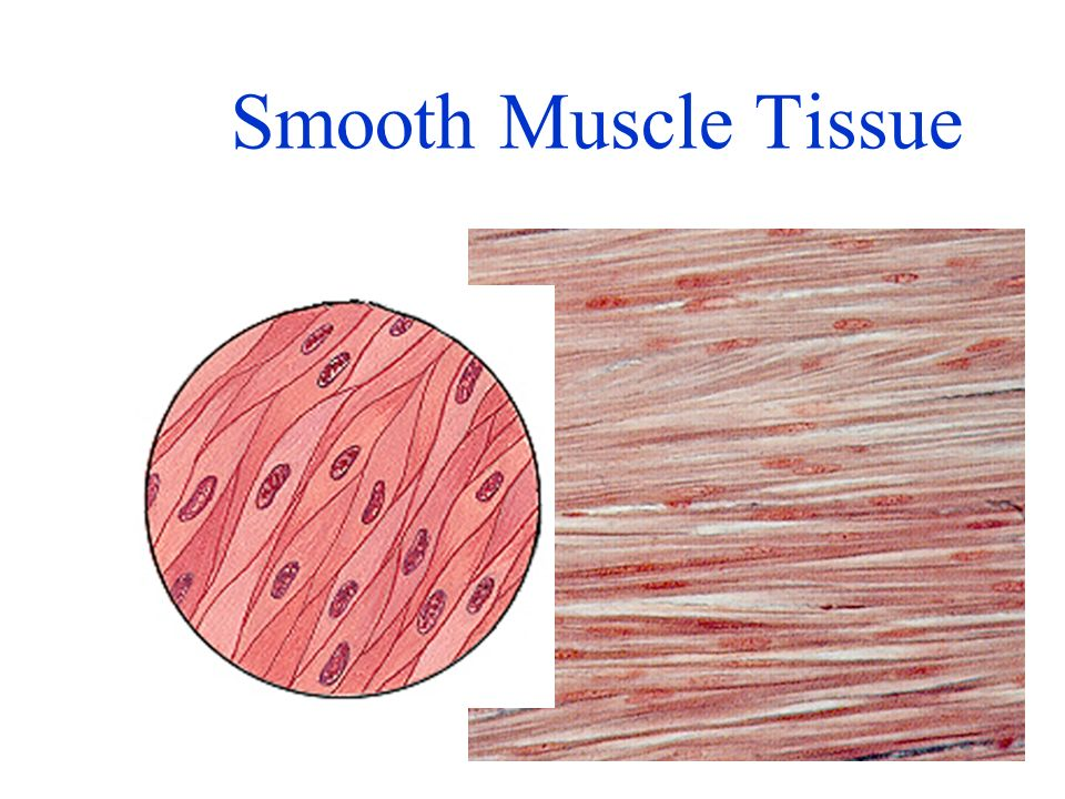 Top pdf human pulmonary artery smooth muscle cells
