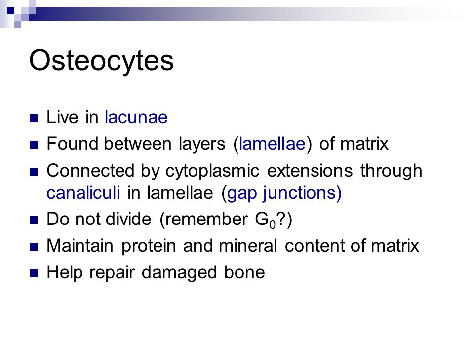 Lecture 6: Osseous Tissue and Bone Structure - ppt download