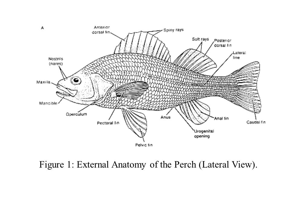 Fishes. - ppt video online download