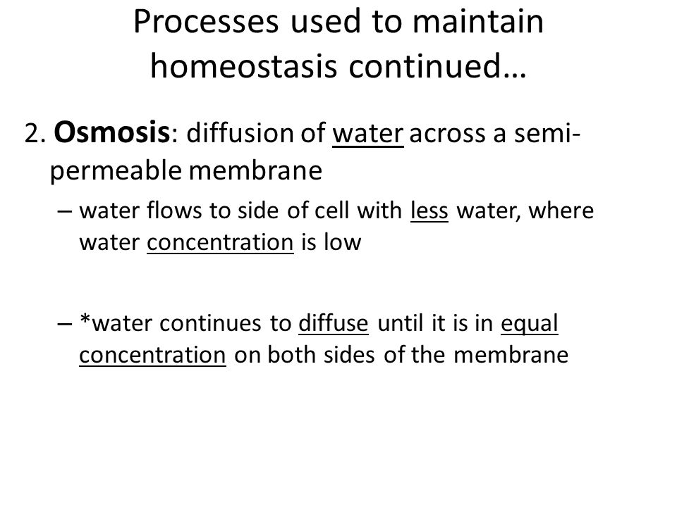 Processes used to maintain homeostasis continued…