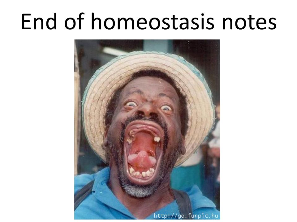 End of homeostasis notes