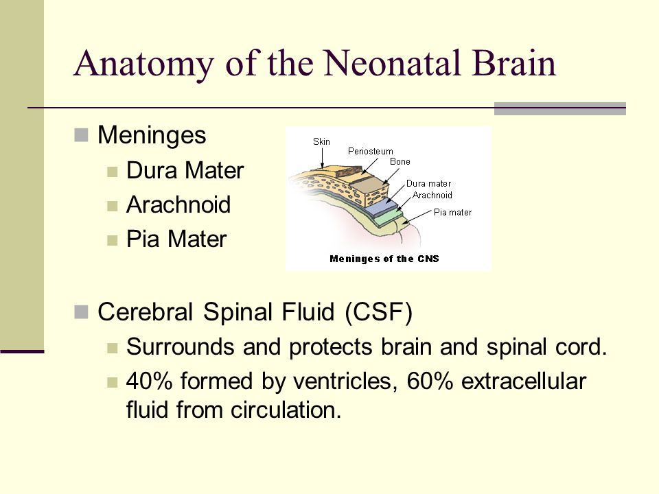 Neonatal Echoencephalography - ppt video online download