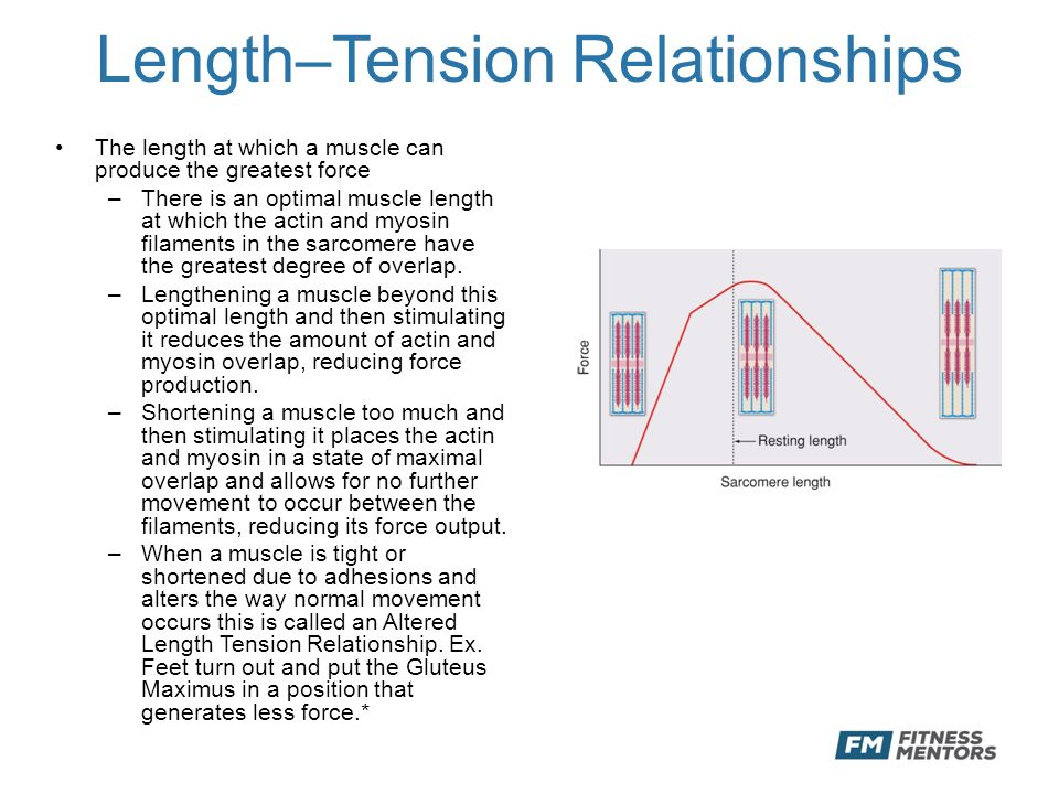 muscle force and velocity relationship