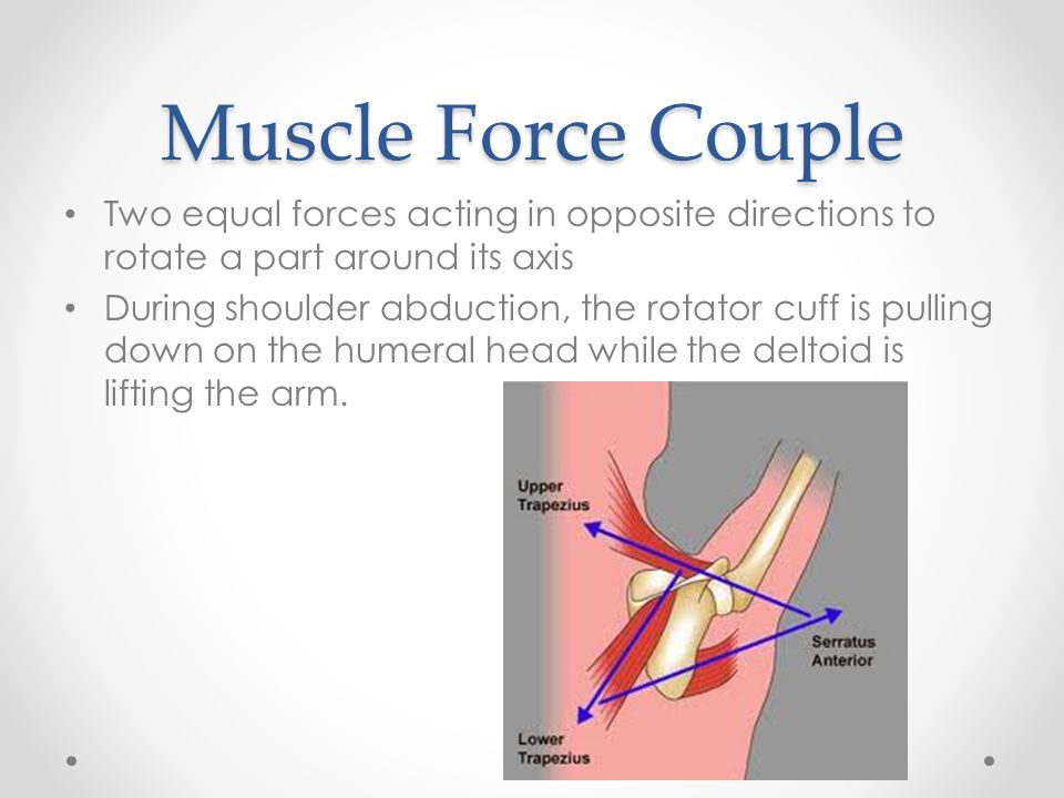 Ch 21 Shoulder Ppt Download