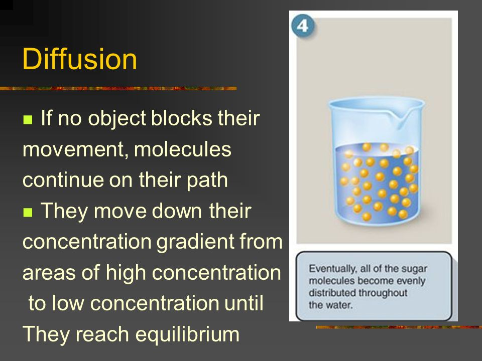 Diffusion If no object blocks their movement, molecules