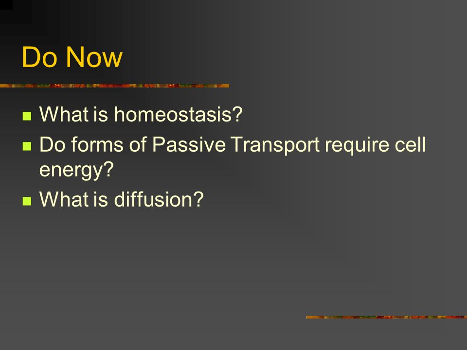 Do Now What is homeostasis