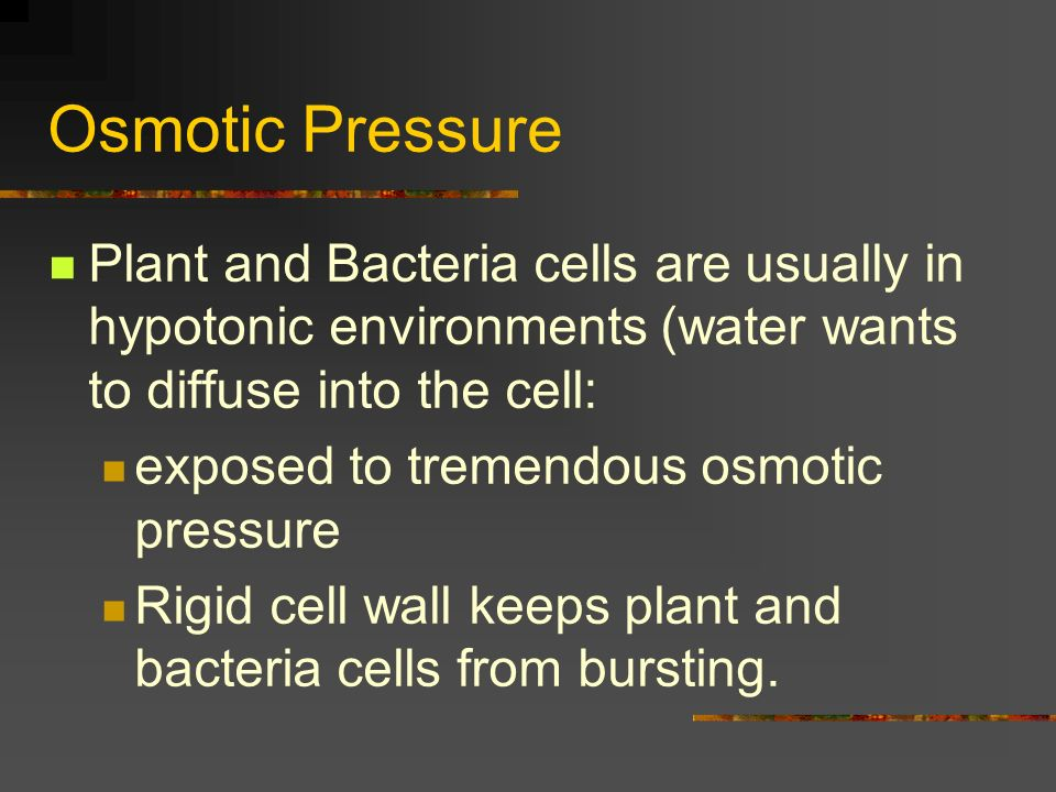 Osmotic Pressure Plant and Bacteria cells are usually in hypotonic environments (water wants to diffuse into the cell: