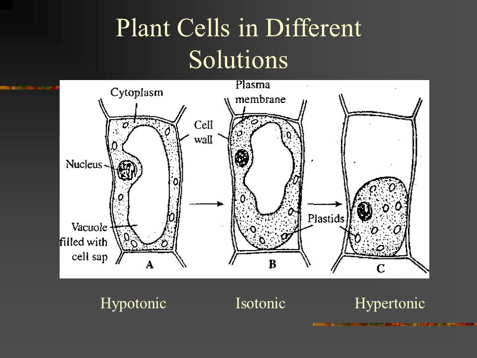 Plant Cells in Different Solutions