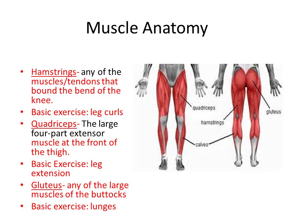 Muscle Anatomy. - ppt video online download