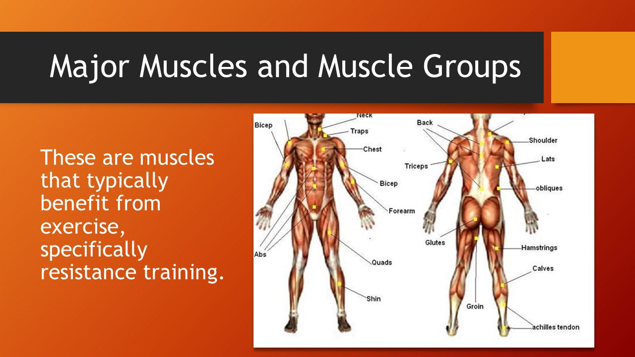 Healthy Muscles Matter Ppt Download