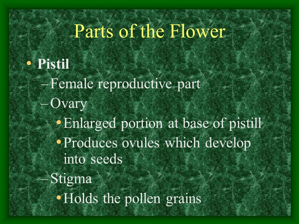 Parts of the Flower Pistil Female reproductive part Ovary