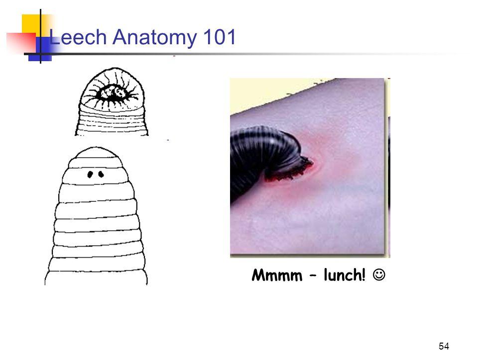 Biology 11 – Kingdom Animalia Study of the Primitive Worms - ppt ...
