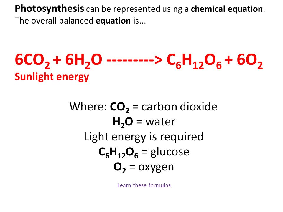 6CO2 + 6H2O > C6H12O6 + 6O2 Sunlight energy