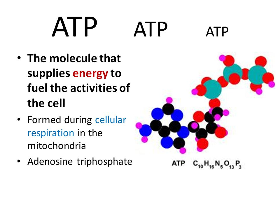 ATP ATP ATP The molecule that supplies energy to fuel the activities of the cell. Formed during cellular respiration in the mitochondria.