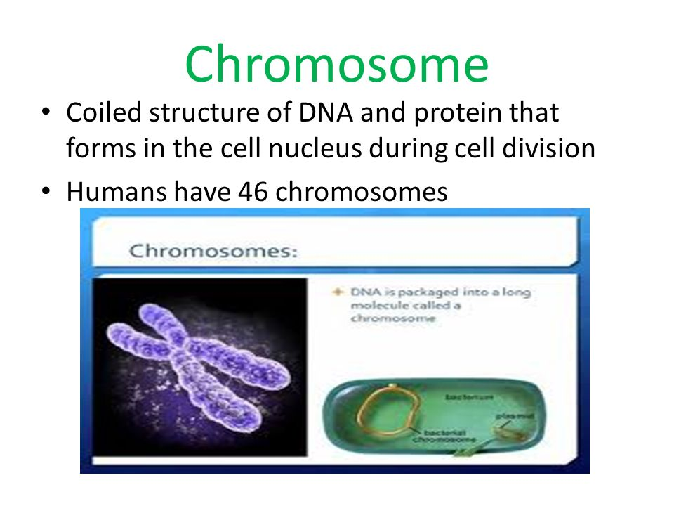 Chromosome Coiled structure of DNA and protein that forms in the cell nucleus during cell division.