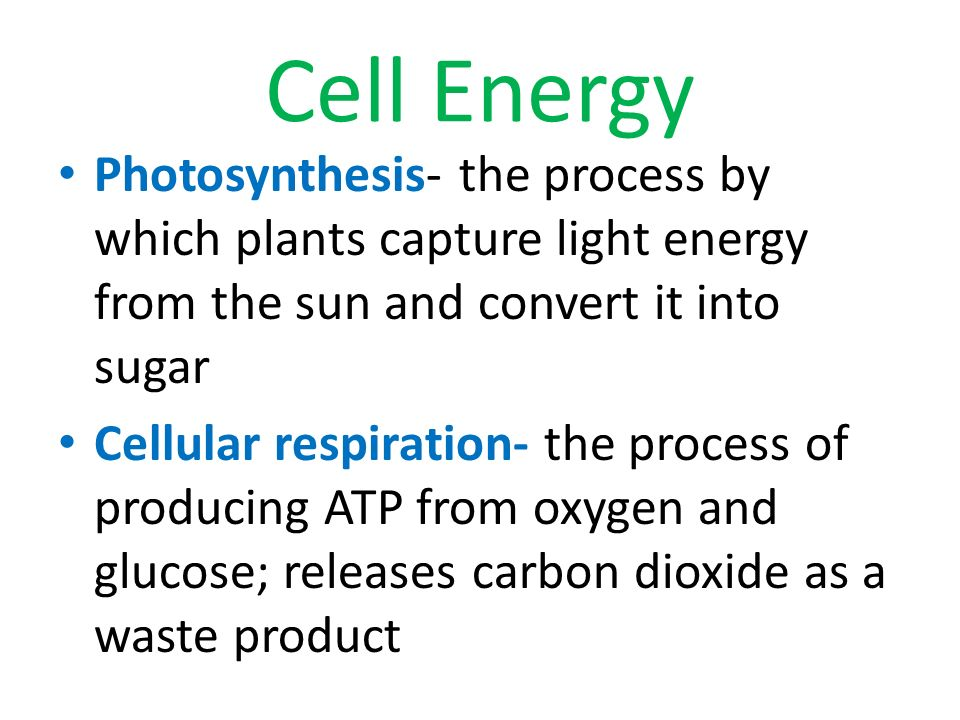 Cell Energy Photosynthesis- the process by which plants capture light energy from the sun and convert it into sugar.