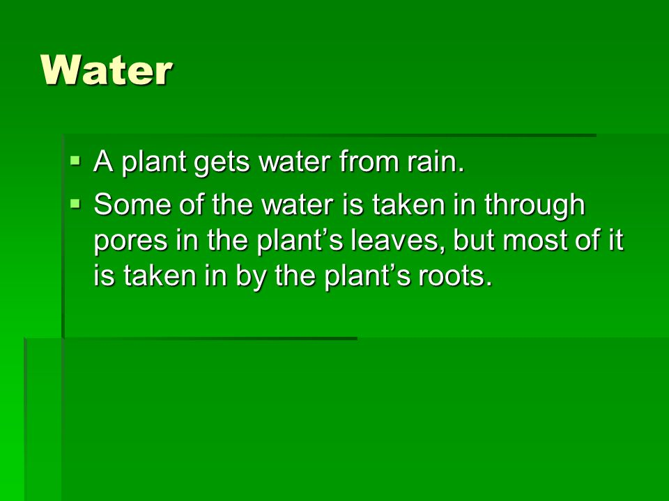 Water A plant gets water from rain.