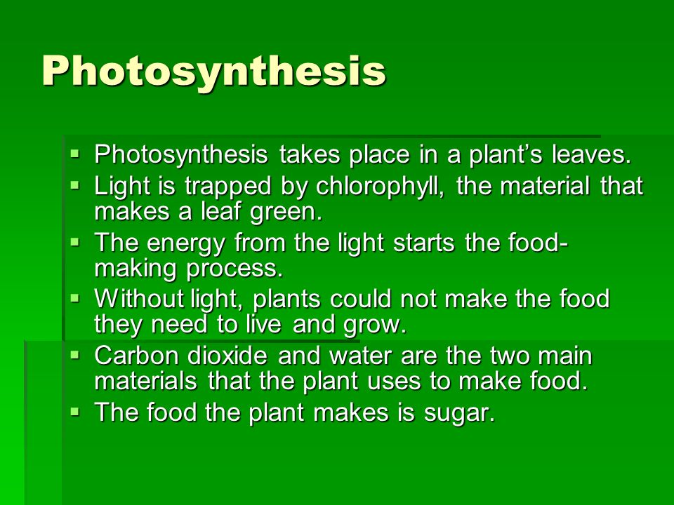 Photosynthesis Photosynthesis takes place in a plant's leaves.