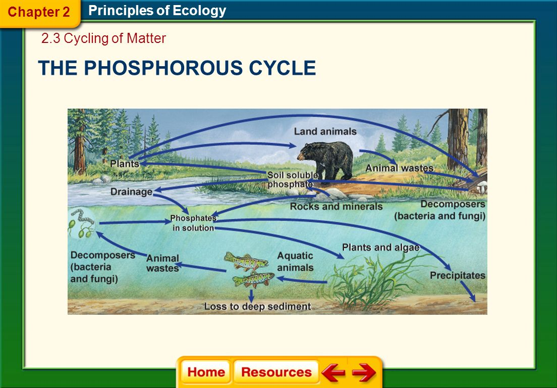 THE PHOSPHOROUS CYCLE Chapter 2 Principles of Ecology