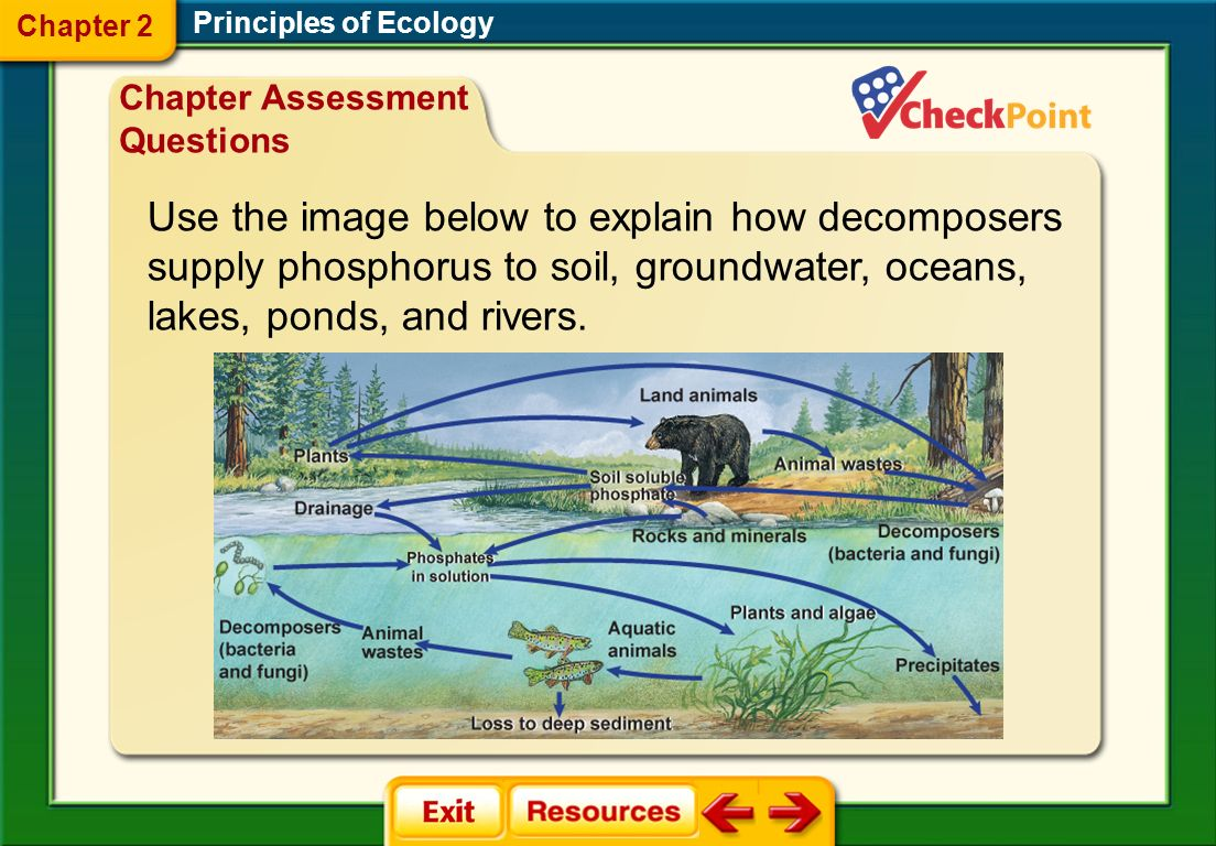 Use the image below to explain how decomposers