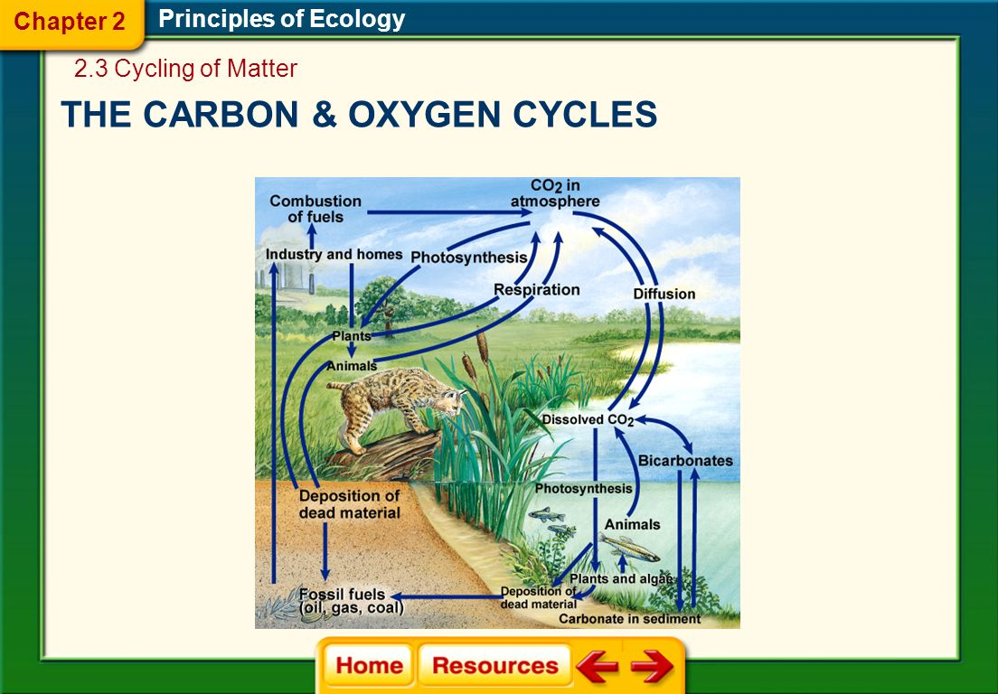 THE CARBON & OXYGEN CYCLES